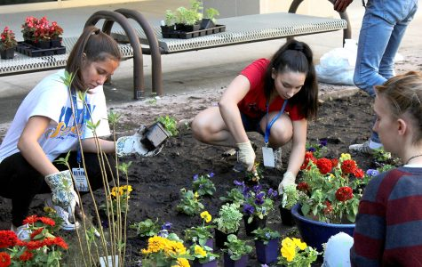 Earth Club Plans a Butterfly Garden